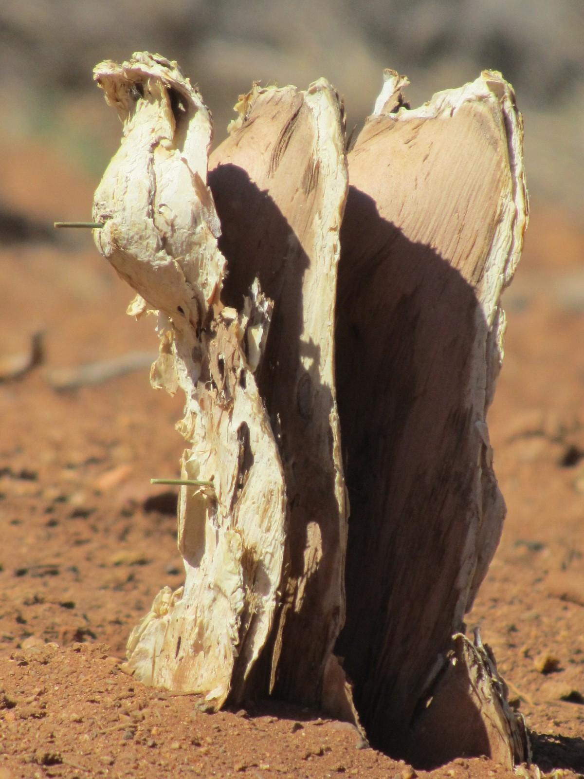 3deep - 2011 - bark; thorns